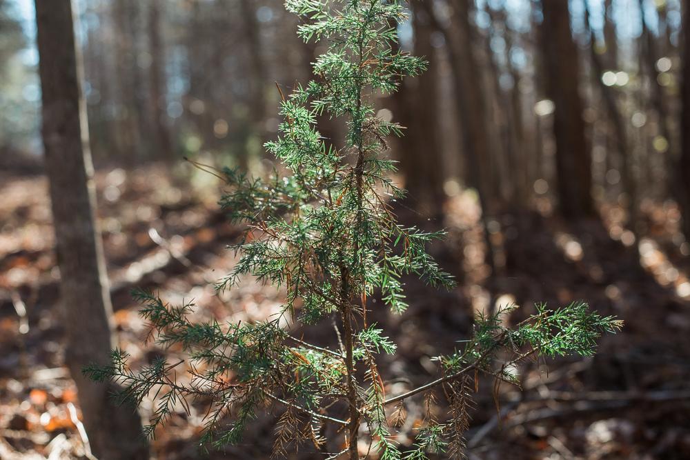 woods (56 of 66).jpg