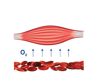 1. Muscle oxygenation