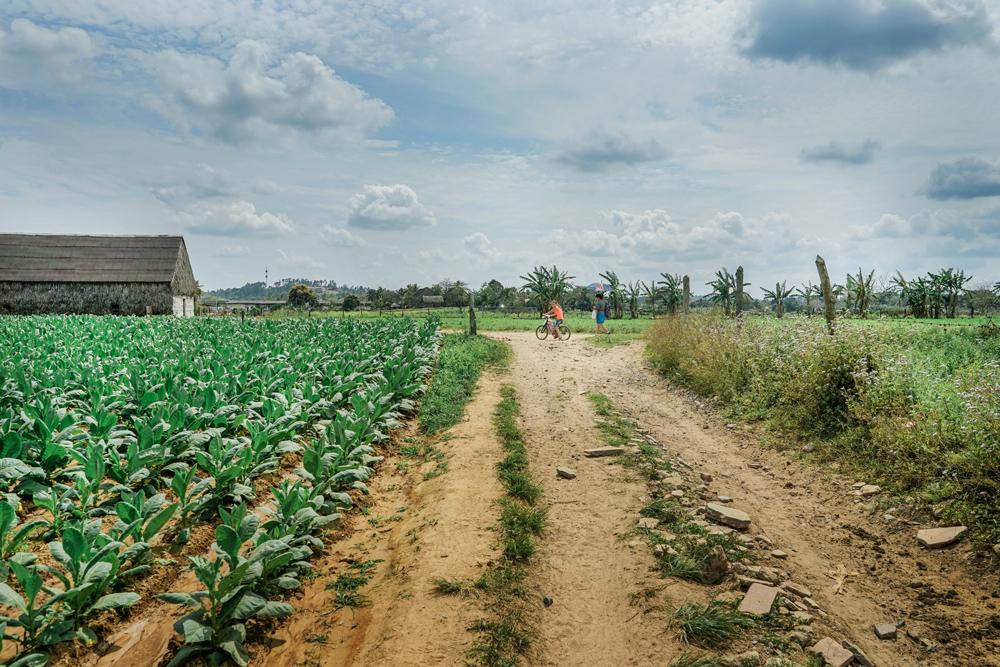 cuba_tobaccofarm-10.jpg