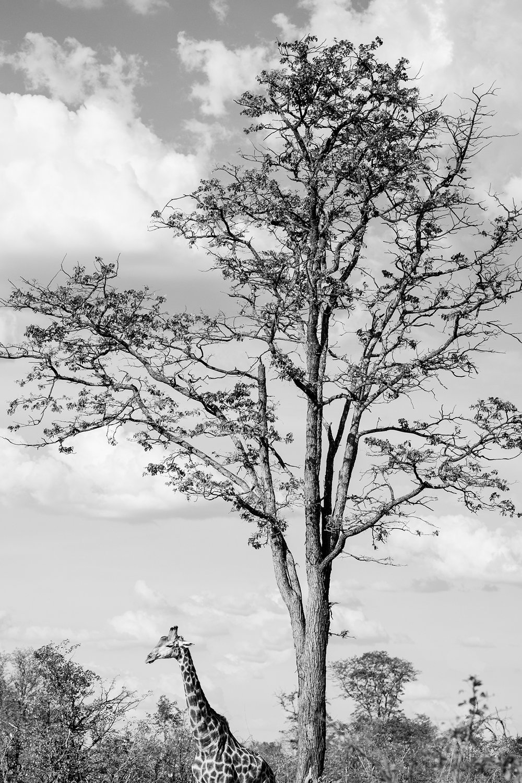 2018JDP_Botswana-54.jpg