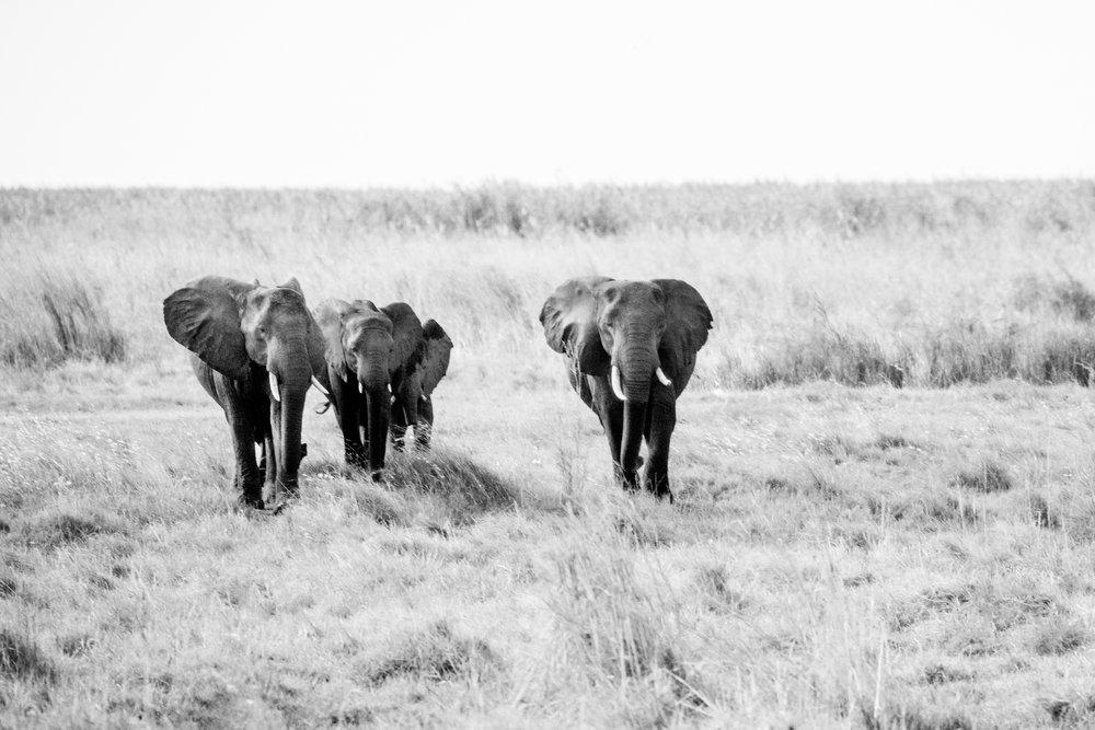 2018JDP_Botswana-9.jpg