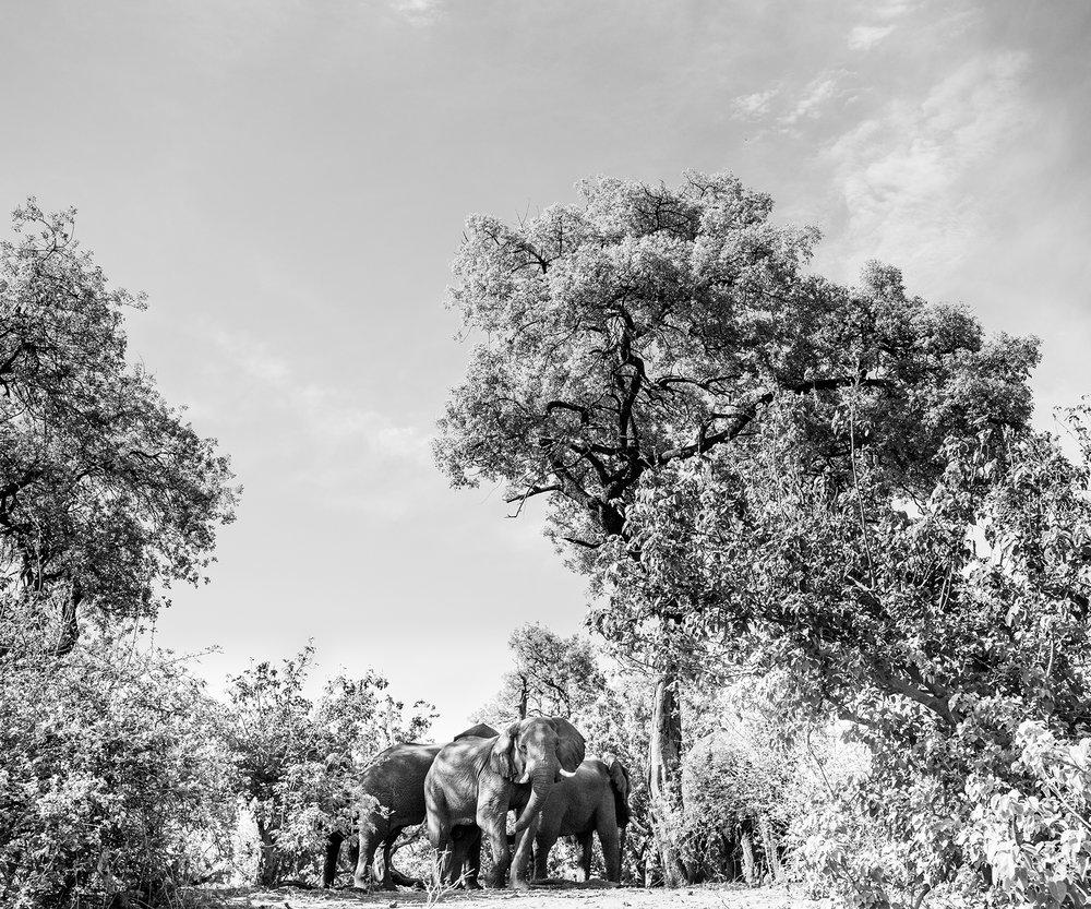 2018JDP_Botswana-42.jpg