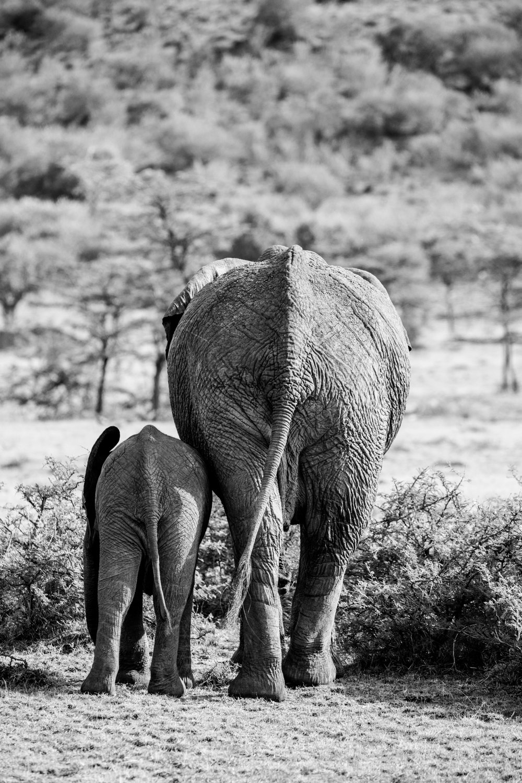 KenyaFeb2019_Safari-173.jpg