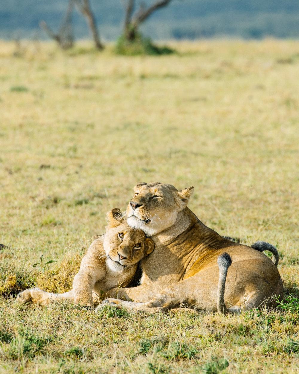 KenyaFeb2019_Safari-251.jpg