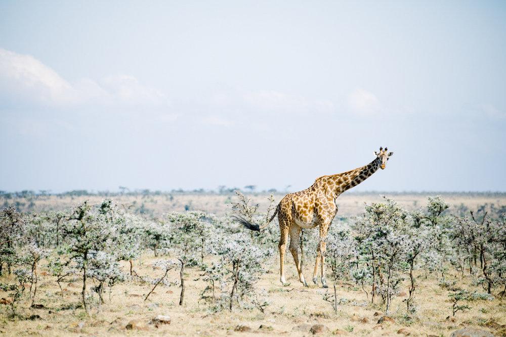 KenyaFeb2019_Safari-93.jpg