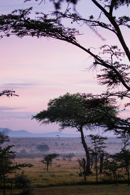 KenyaFeb2019_Safari-48.jpg