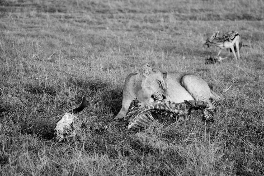 KenyaFeb2019_Safari-227.jpg