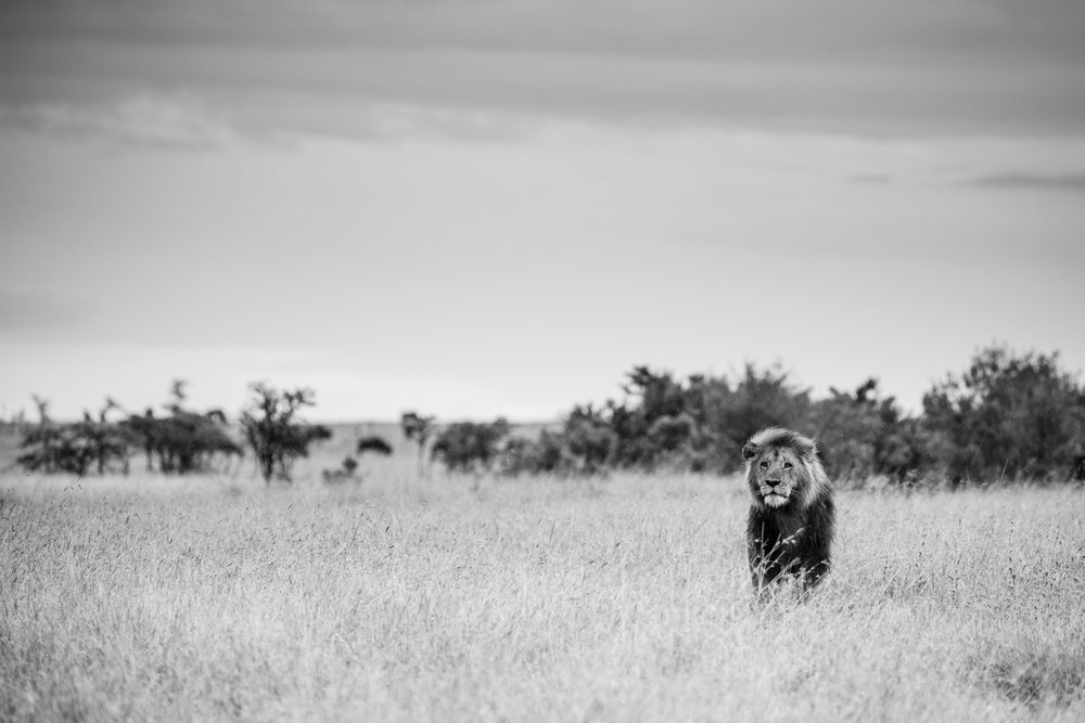 KenyaFeb2019_Safari-237.jpg