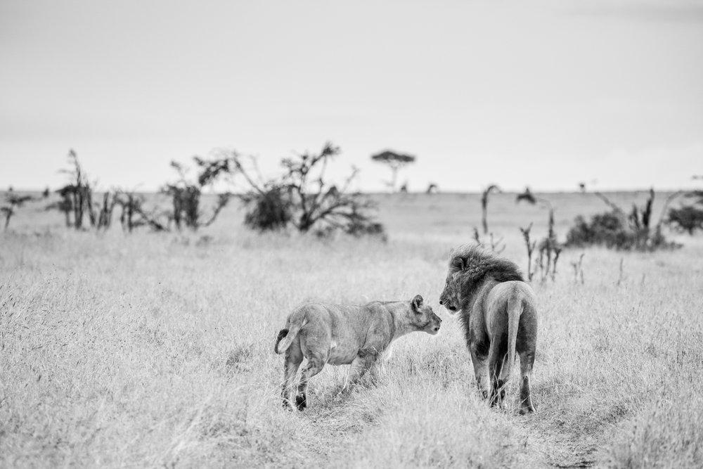 KenyaFeb2019_Safari-240.jpg
