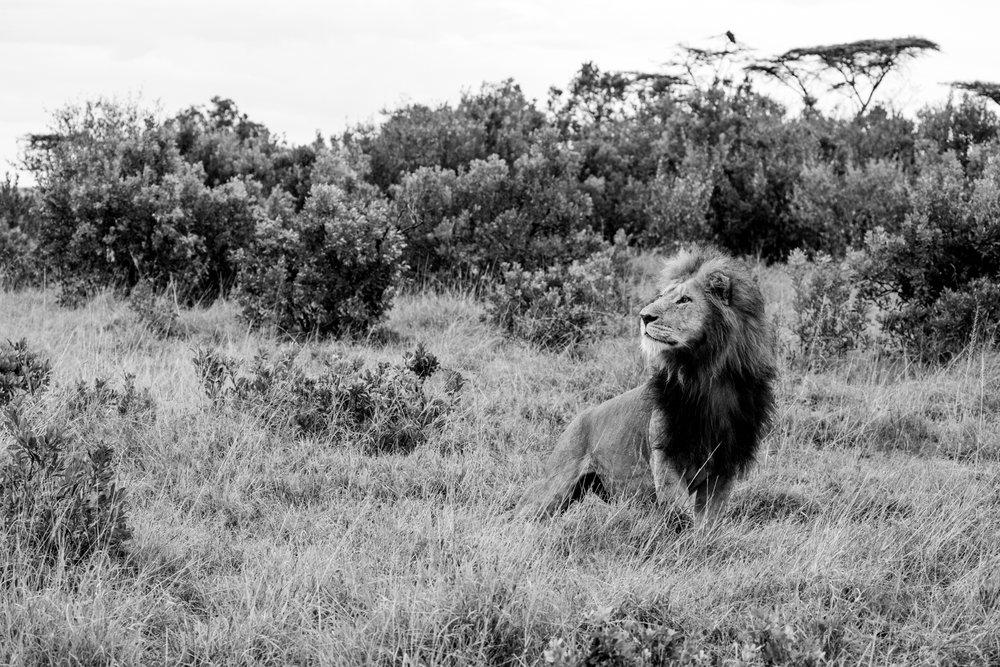 KenyaFeb2019_Safari-243.jpg