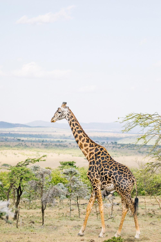KenyaFeb2019_Safari-94.jpg