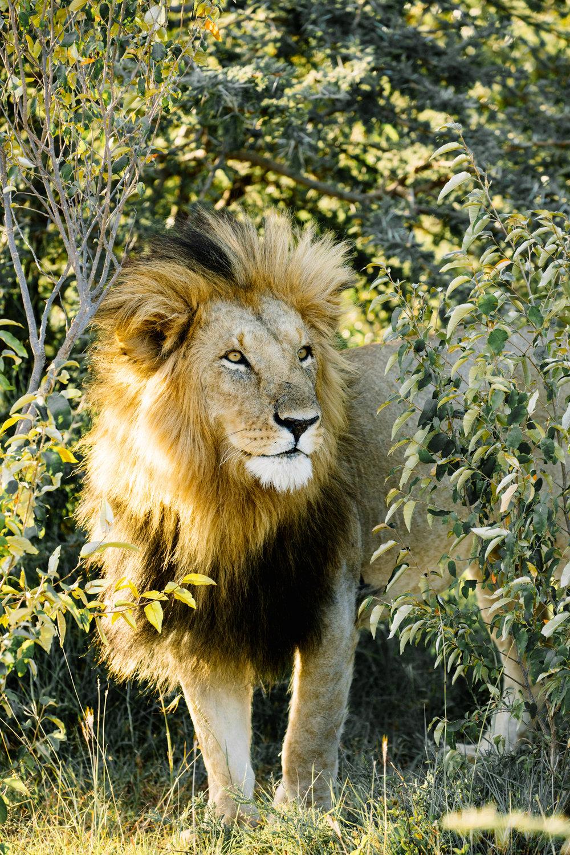 KenyaFeb2019_Safari-179.jpg