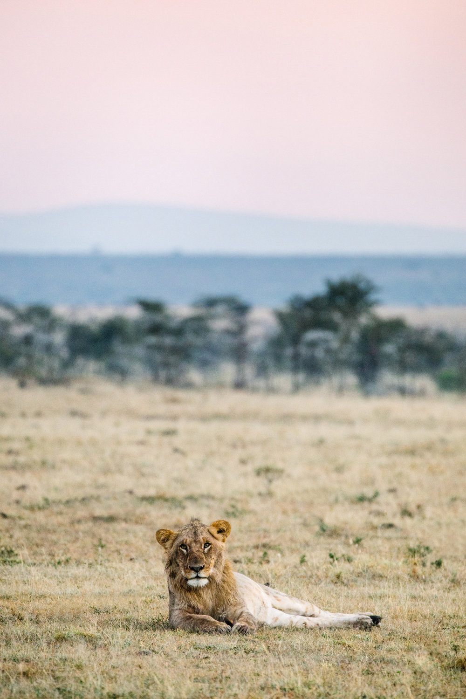 KenyaFeb2019_Safari-228.jpg