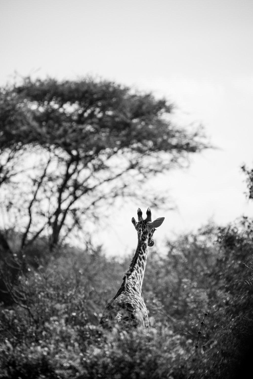 KenyaFeb2019_Safari-102.jpg
