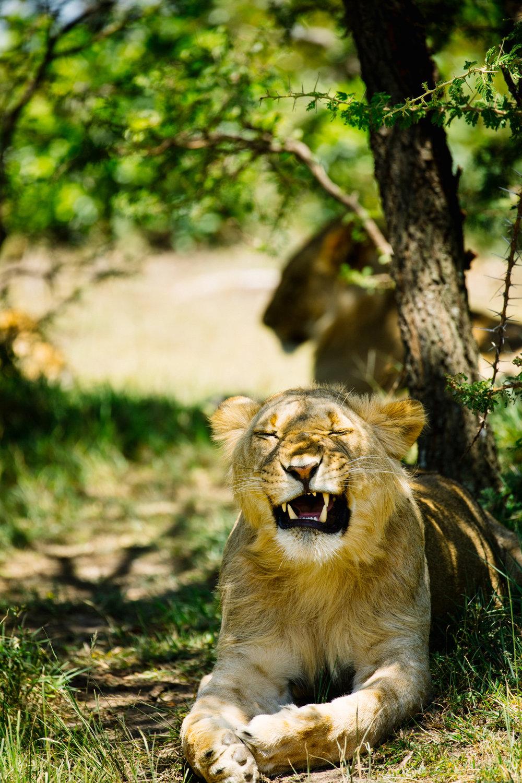KenyaFeb2019_Safari-174.jpg