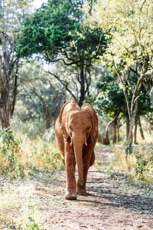 KenyaFeb2019_Safari-150.jpg