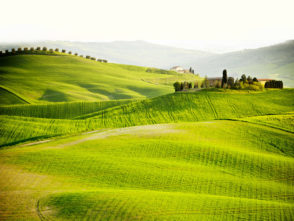 Tour the Tuscan Hills   (and support wildlife conservation)