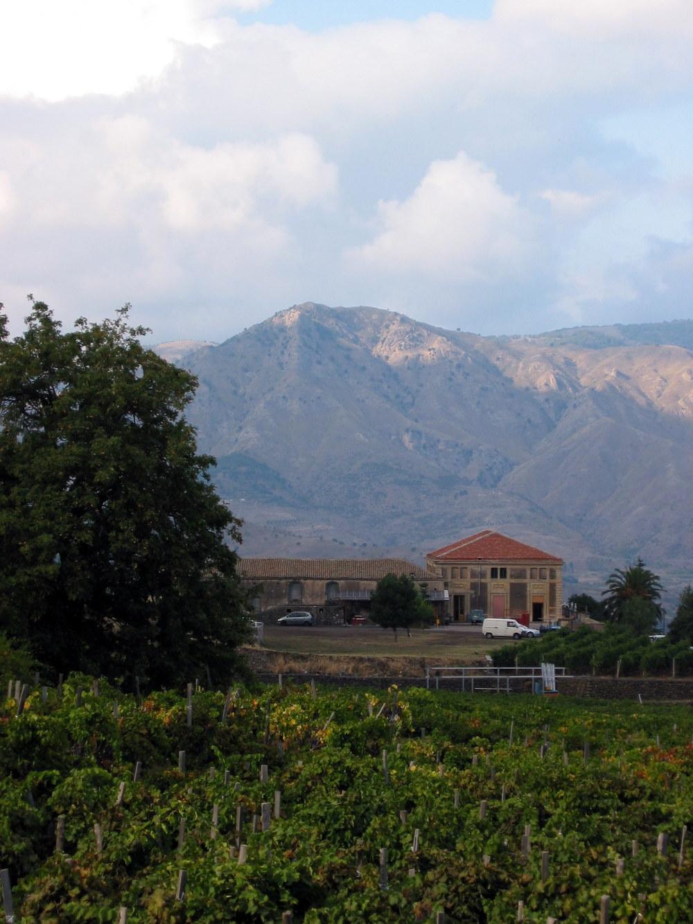 Etna_Wine,_Passopisciaro,_Sicily,_Italy.jpg