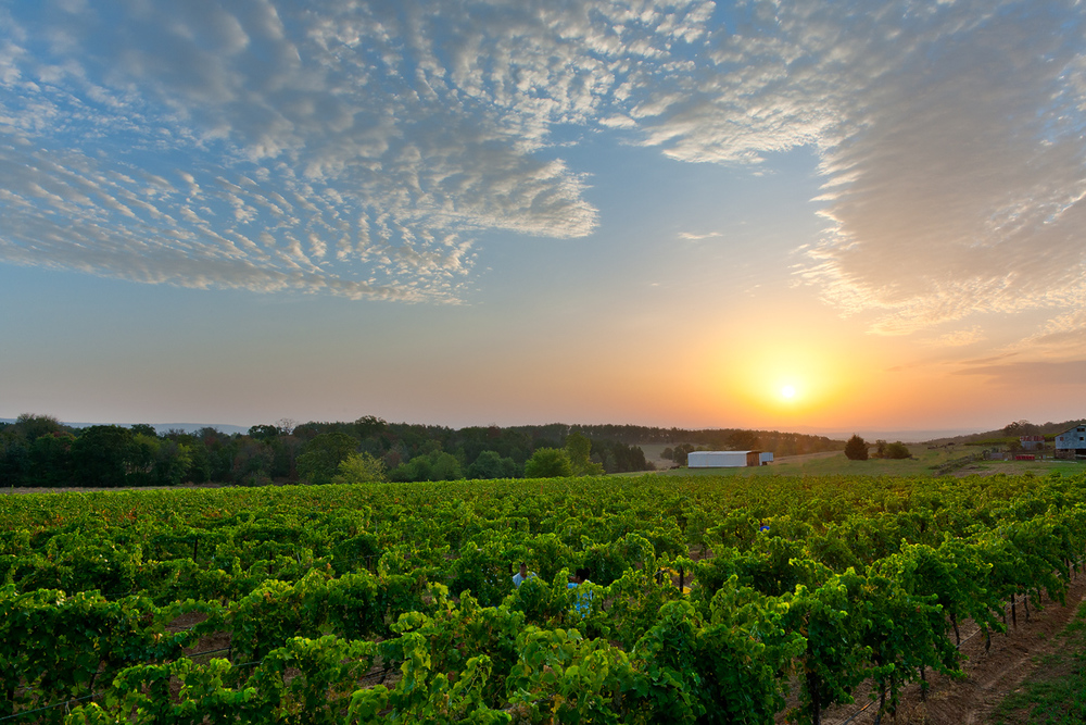 Arkansas Wine Country I Photo credit: Arkansas Tourism