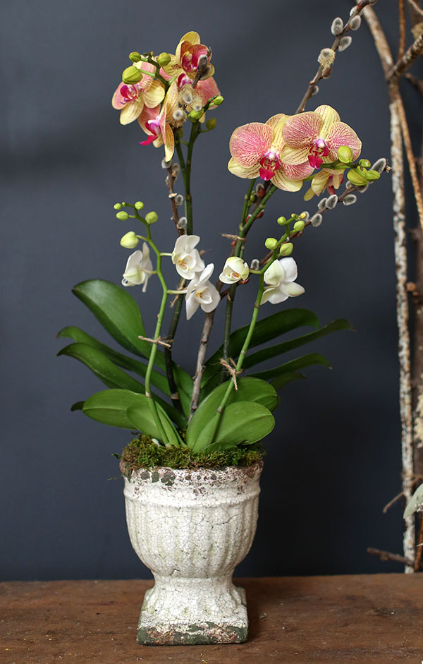 Potted Orchids.jpg