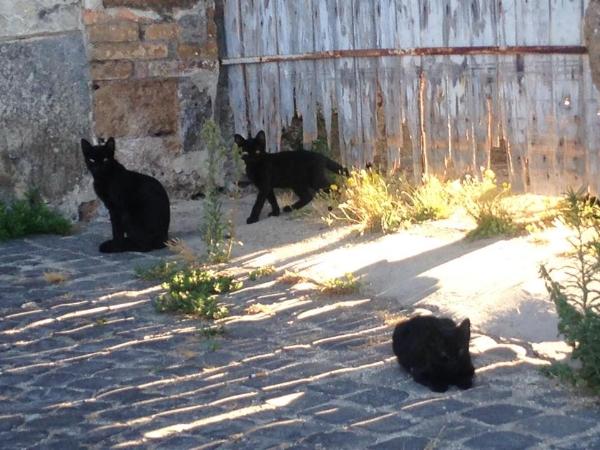Gattini! (Italian kittens...watching me paint!)