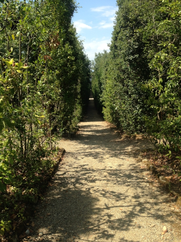 pathway in the Boboli Gardens