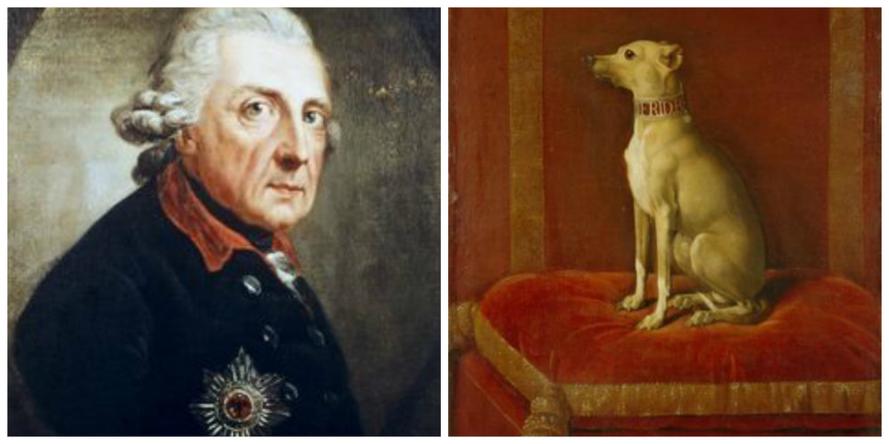 Fredrick The Great and beloved Italian greyhound...he owned 50 Italian greyhounds at a time!