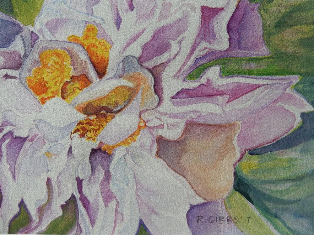 Peony  (Watercolor)