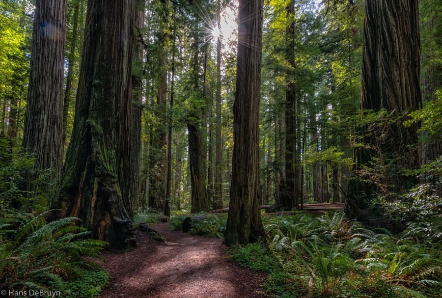Endor...or Redwoods National Park