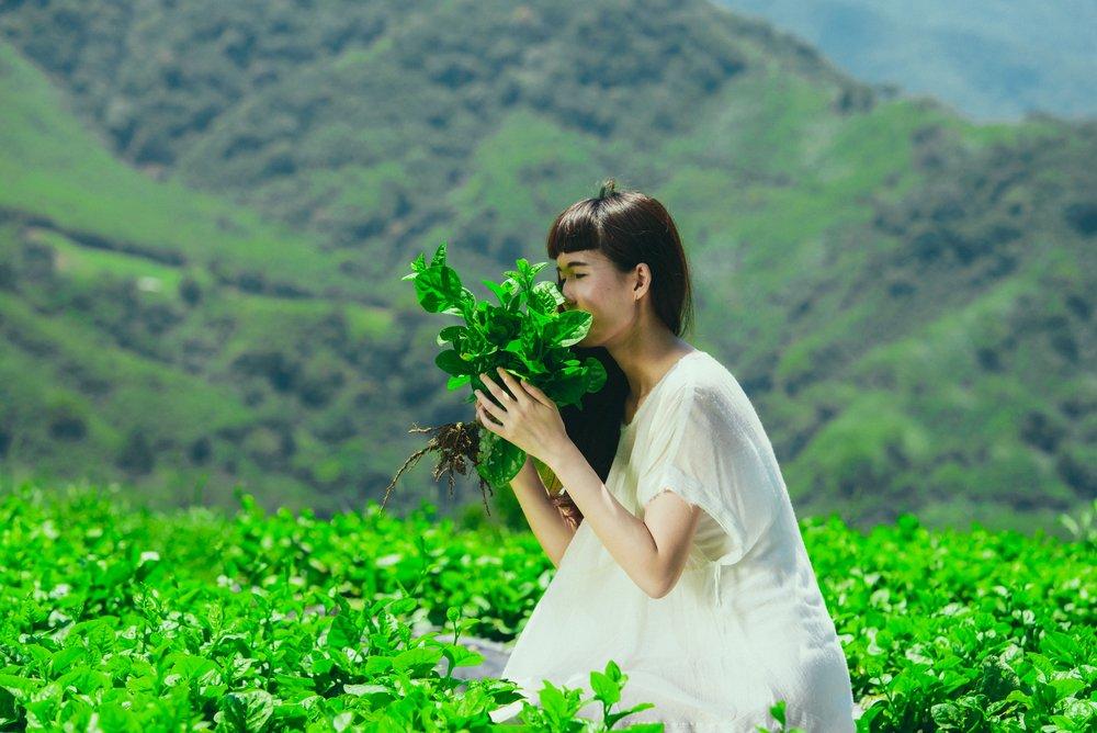 新鮮野菜 やさい - 高達72種嚴選台東契作小農當日配送的新鮮野菜其中包含昭和菜、紅鳳菜、紅莧菜、龍鬚菜等有機栽種之珍貴野菜其營養價值與人工栽種蔬菜高出20倍以上。