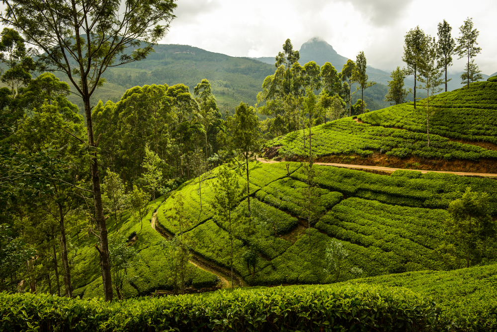 Sri Lanka has the perfect weather to provide one of the most biodiverse spots in the world.