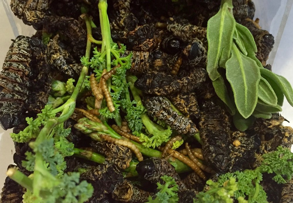 Mopane and Meal Worms in spiced chilli oil, garnished with coastal salad. As part of an installation for the Centre of Excellence in Food Security exhibition.