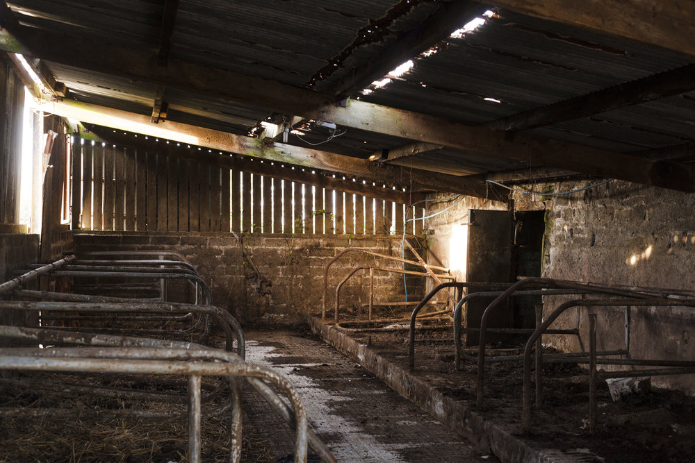Inside the cattle shed, built onto to one of the stone barns.