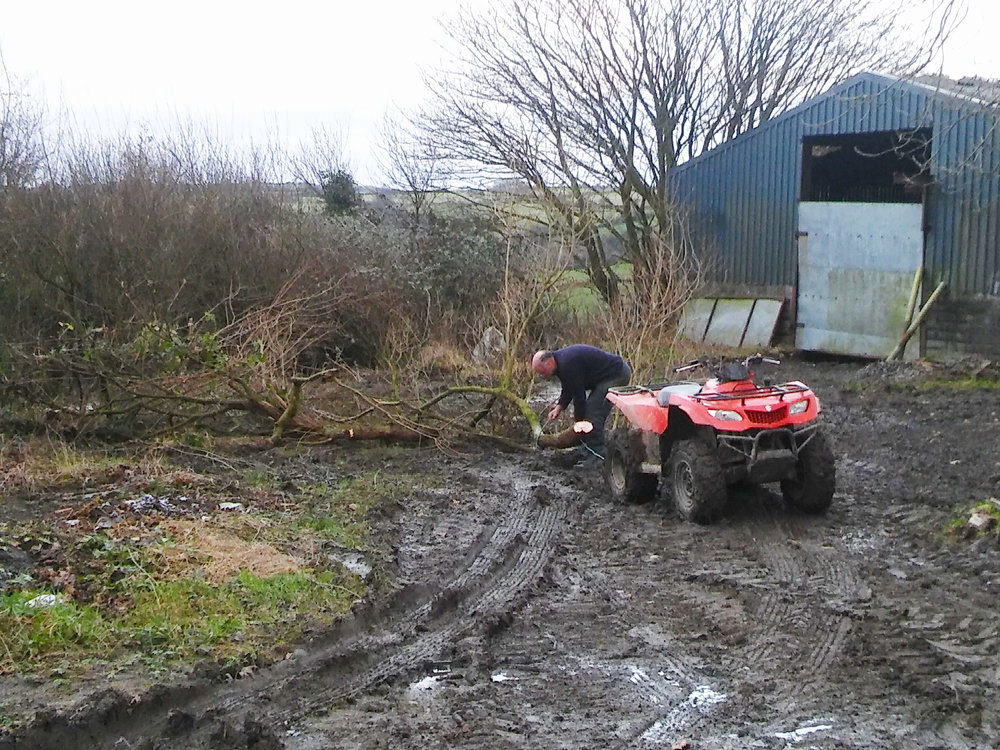 Simon using the quad to drag trees out of the overgrown hedgerow.
