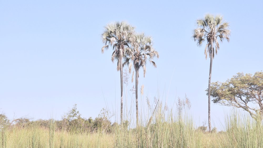 africanriversafari4.jpg