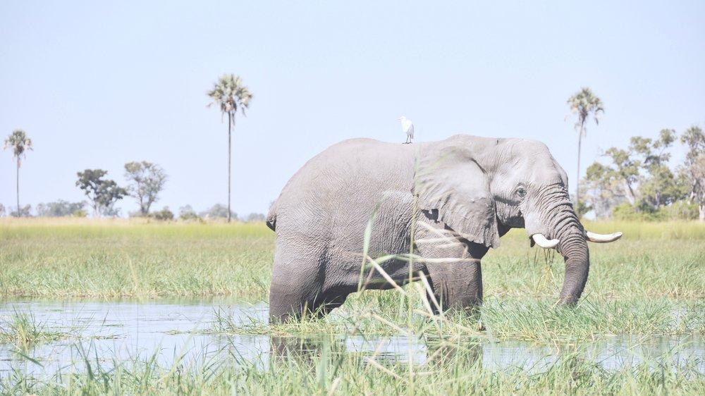 africanriversafari6.jpg