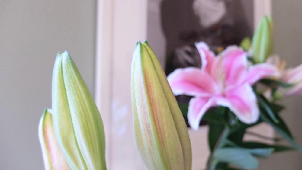 petalflower4.jpg