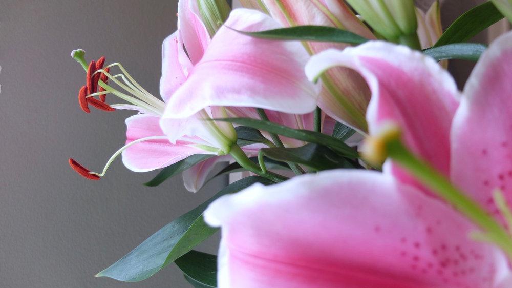 petalflower11.jpg