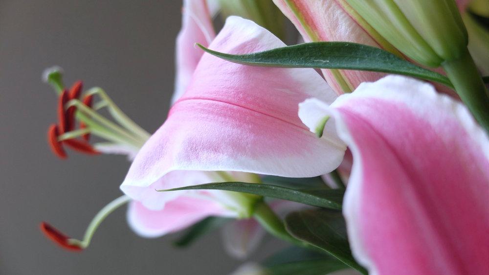 petalflower12.jpg