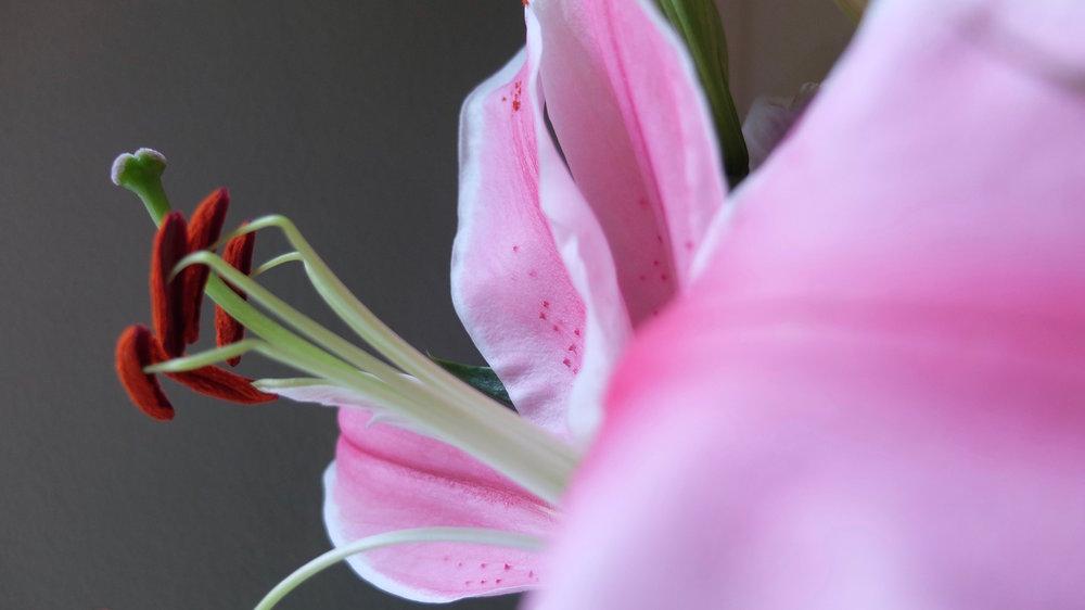 petalflower13.jpg