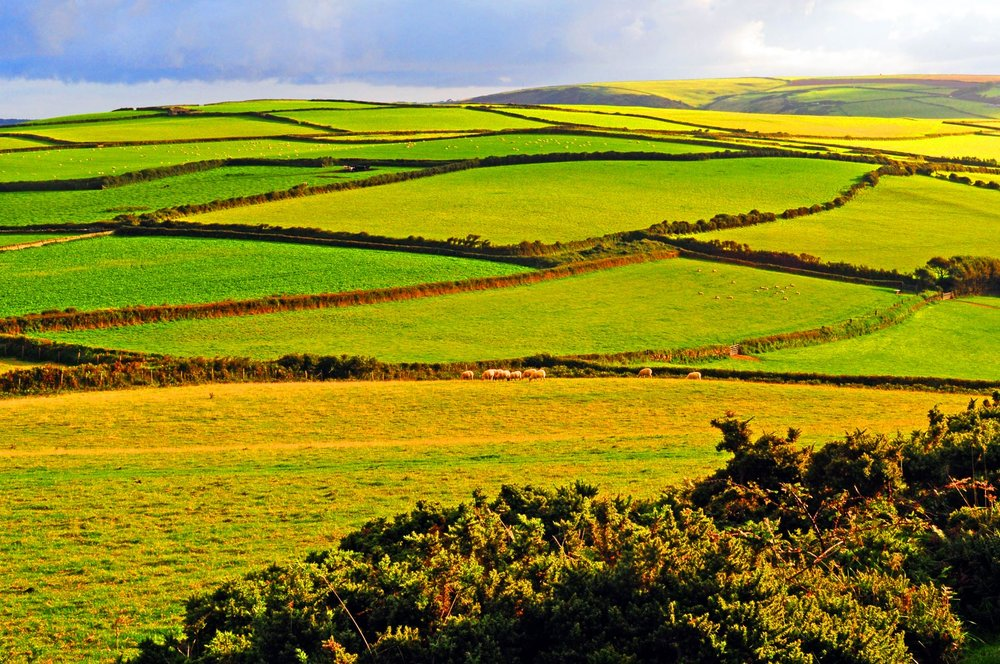 Green Fields, Baggy Point, Croyde copy.JPG