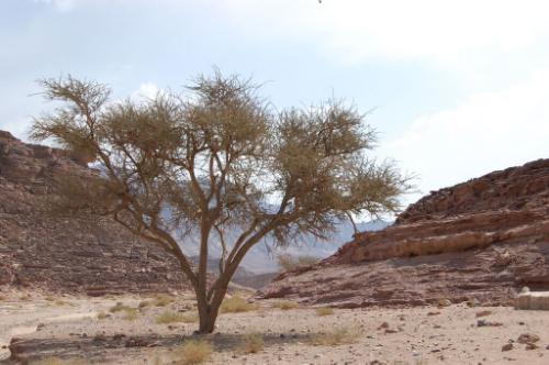 Sheikh Ali Sinai Desert