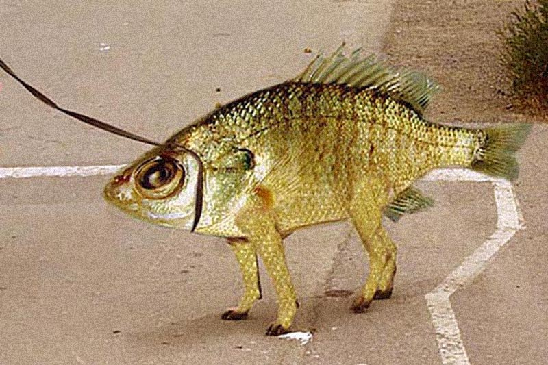fish-or-dog.jpg