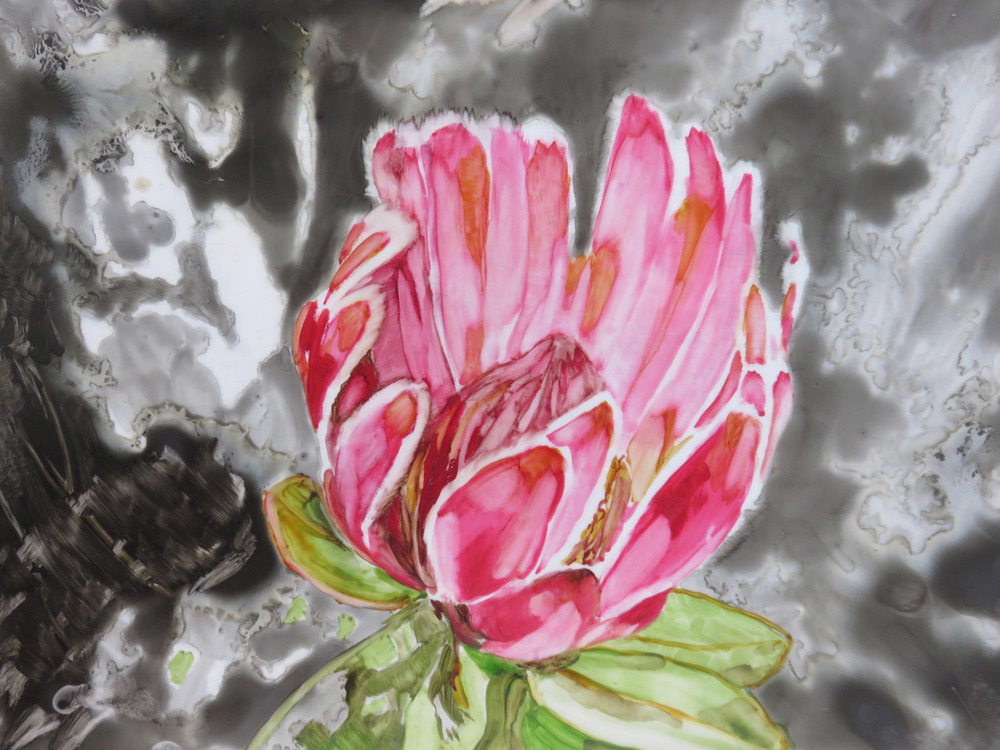 Lizza Littlewort  'Study - Protea'  Oil on tracing paper  21 x 29,7 cm