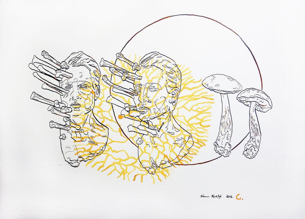 Johann Nortje  C  Acrylic ink on Hahnemühle  39 x 54 cm
