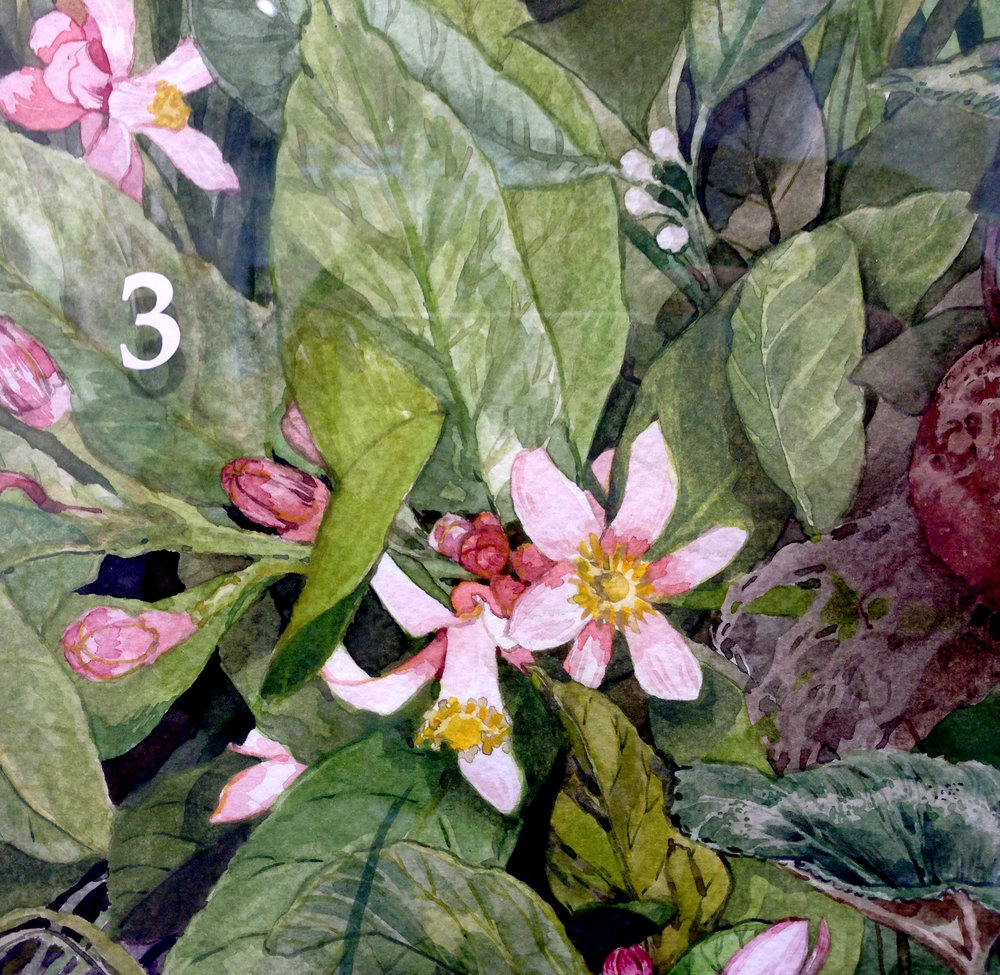 Isabella Kuijers  Detail from Cryptobotany  Watercolour on paper  74.5 x 104 cm