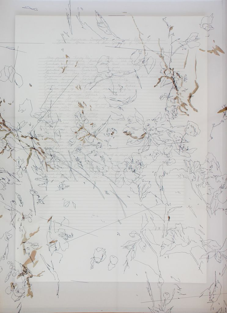 Isabella Kuijers  Post Lapsarian Bouquet - Poisonous  Pencil, pen on paper and glass  49 x 34.5 cm