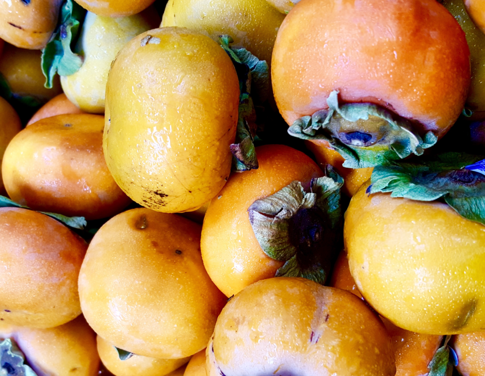 Persimmons 1 .png