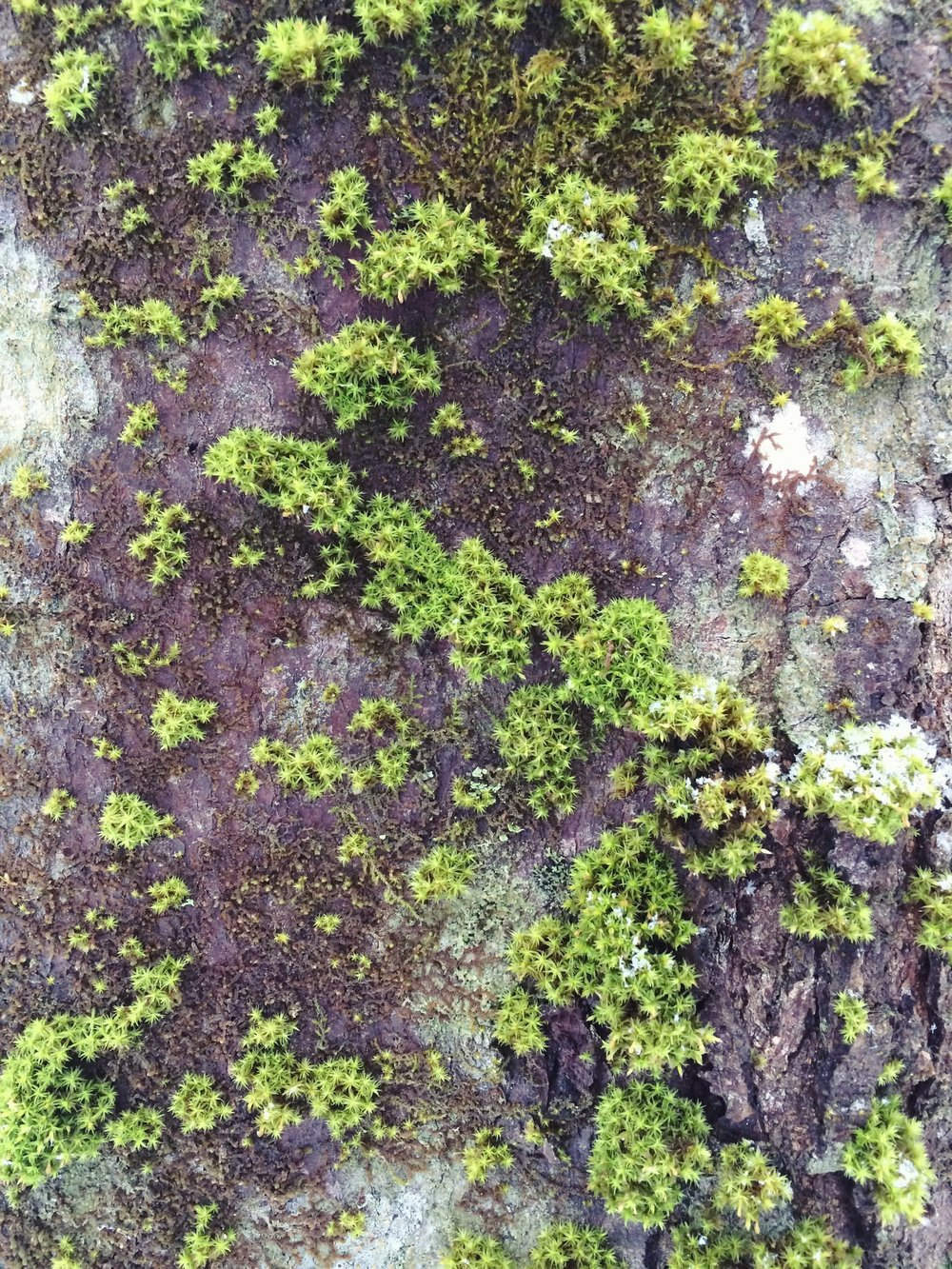 Live Like A Lichen—Lily Myers