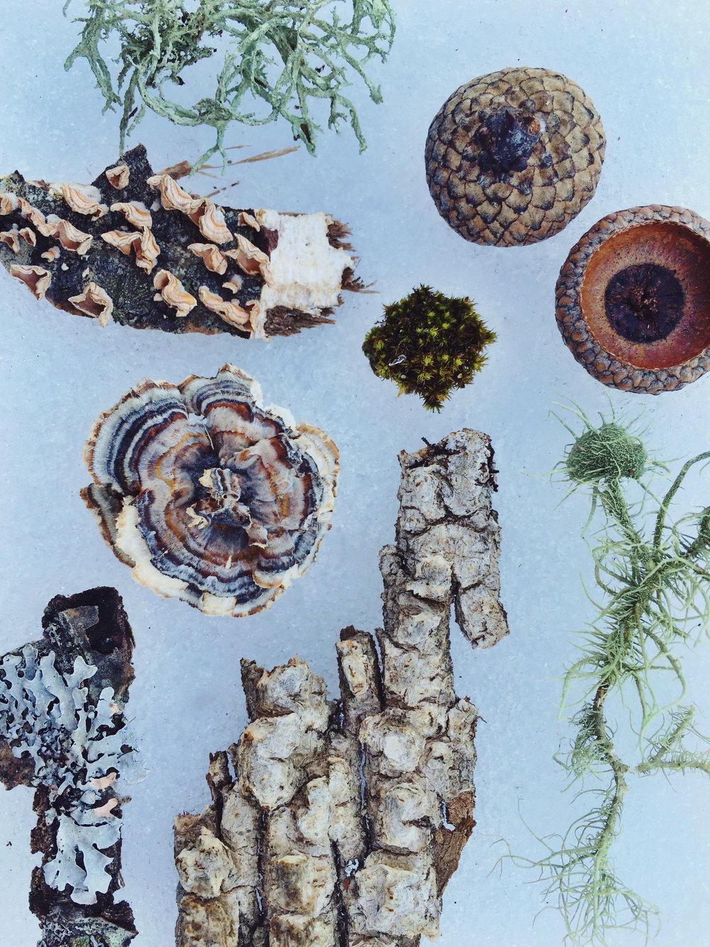 Neighborhood Naturalist—Alison Znamierowski